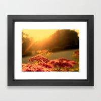 Pink bulb in the Sunrise Framed Art Print