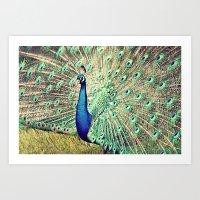 Pretty as a Peacock Art Print