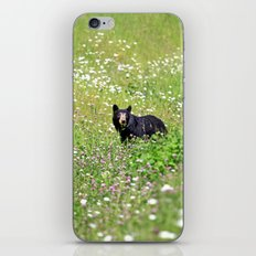 Pretty Bear iPhone & iPod Skin