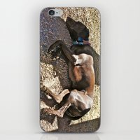 Sleepy Alaska iPhone & iPod Skin