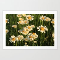 Field of Happiness Art Print