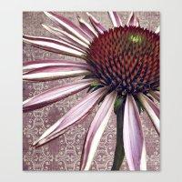 coneflower chic Canvas Print