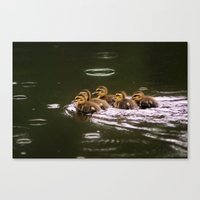 Ducklings in a Drizzle Canvas Print