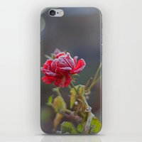Rose In The Frost iPhone & iPod Skin
