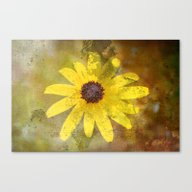 Canvas Print featuring Yellow Daisy by Fine Art By Rina