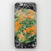 High Line Sunshine iPhone & iPod Skin