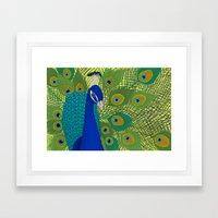 Peacock In Colour Framed Art Print