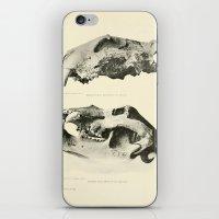 Savor iPhone & iPod Skin