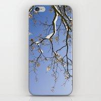 Snowy Branch iPhone & iPod Skin