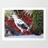 Partial Albino Grackle Art Print
