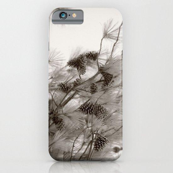 Pine Cones iPhone & iPod Case