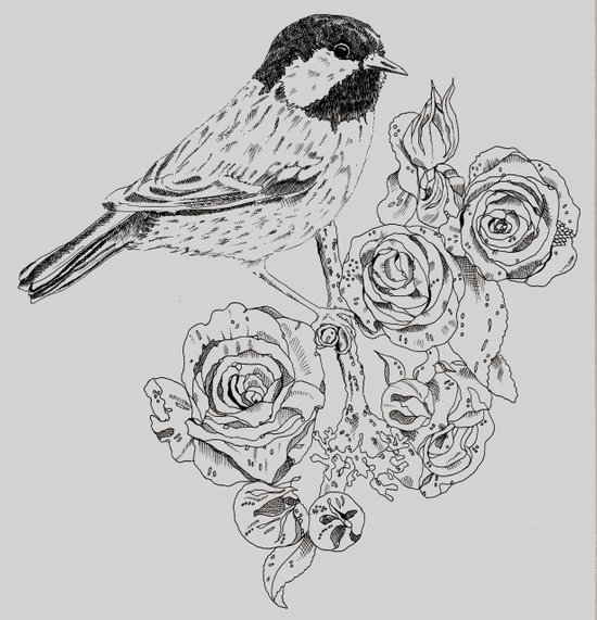 Cole Tit & Roses // Hand Drawn Print Art Print