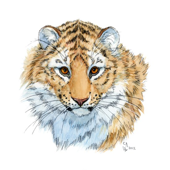 Young Sweet Tiger Canvas Print