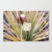 Yucca Flowers in Bloom Canvas Print