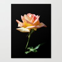 Rose of St. James Canvas Print