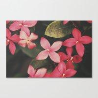 Magenta Flowers Canvas Print