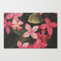 Magenta Flowers Canvas Print