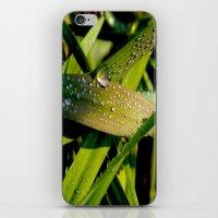 dew iPhone & iPod Skin