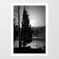 Tree on the Yellowstone Art Print