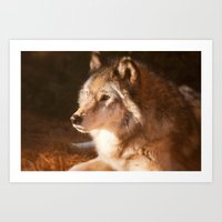 Wolf Beauty Art Print
