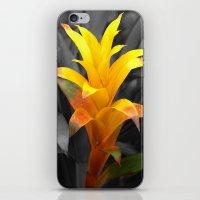 Mellow Yellow iPhone & iPod Skin