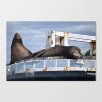 Sea Lion In The Puget So… Canvas Print