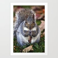 A Squirrel And His Nut  Art Print