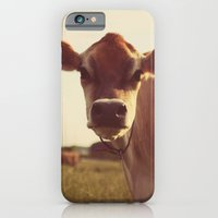 cow iPhone & iPod Cases featuring cow by Beverly LeFevre