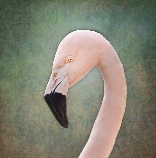 The solitary Flamingo Canvas Print