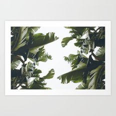 Birds of California Art Print