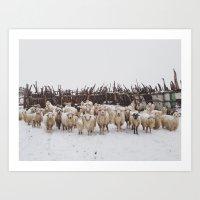 Snowy Sheep Stare Art Print