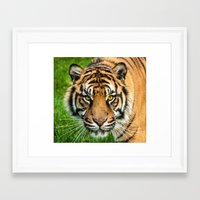 GAZE OF THE TIGER Framed Art Print