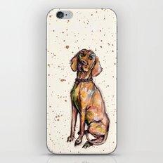 Hungarian Vizsla Dog  iPhone & iPod Skin