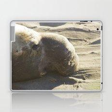 Elephant Seal: Contemplation Laptop & iPad Skin