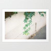 Japanese Maple Leaves Art Print