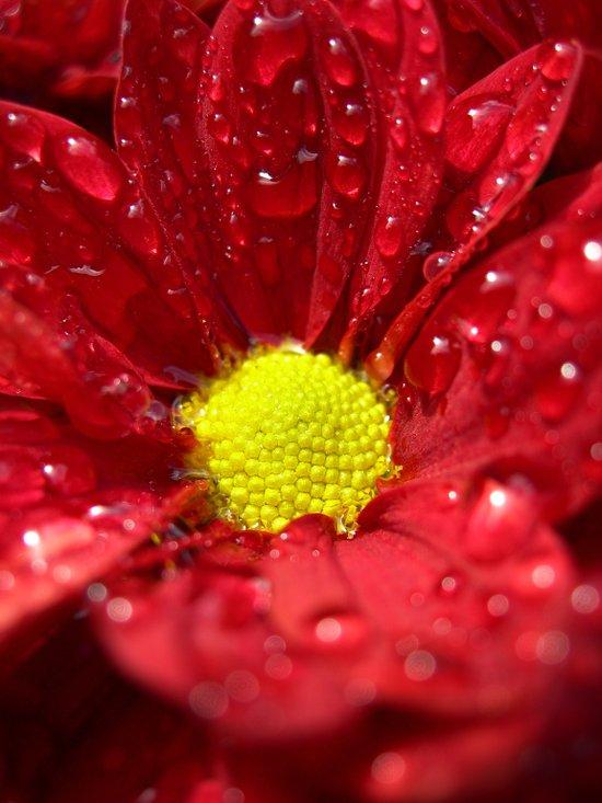 wet bloom I Art Print
