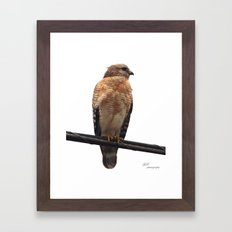 Falcon Wire Framed Art Print