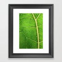 Fiddle Leaf Ficus Tree Framed Art Print