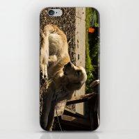 Dog's Life iPhone & iPod Skin