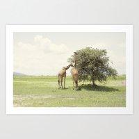 Giraffes::rwanda Art Print