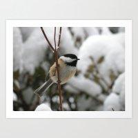 Winter Chickadee Art Print