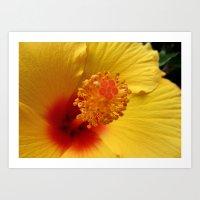 Hibiscus macro Art Print