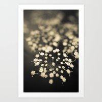 Summer Lace Art Print