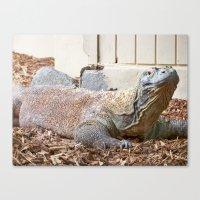 Komodo Dragon Canvas Print