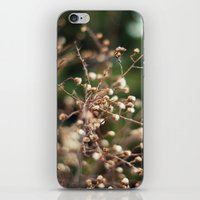 Winter Aster iPhone & iPod Skin