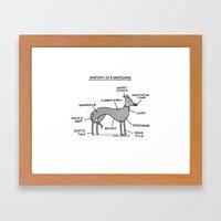 Greyhound Anatomy Framed Art Print