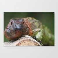 Colorful Iguana Canvas Print