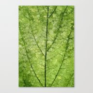 Nature Veins Canvas Print