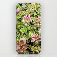 The Fabulous Succulent, … iPhone & iPod Skin