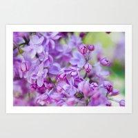 Lilac, Nature Photography, Blossom Print, Purple Wall Art, Spring Blossom Photo, Feminine Art Print